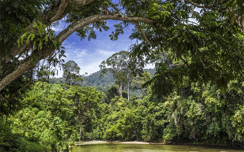 Wonderbaar Rondreis Essential Sumatra   Bijzondere Rondreis Sumatra DN-53